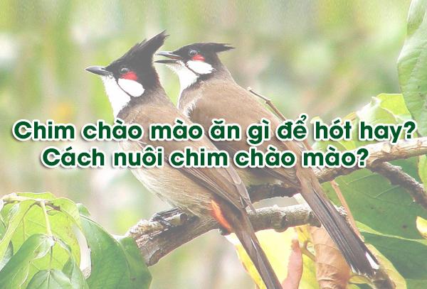 kinh-nghiem-chon-dang-chim-chao-mao-dep-2