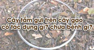 Tam-gui-cay-gao