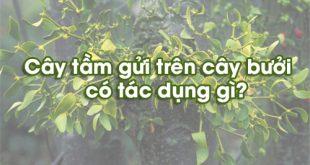 tac-dung-cua-cay-tam-gui-tren-cay-khe